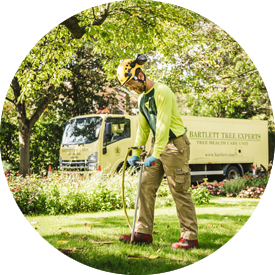 Tree Surgeons In Essex